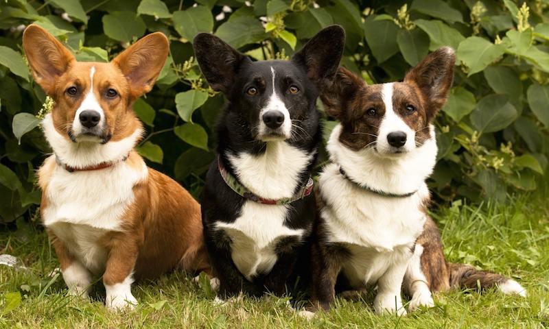 Самые популярные собаки в 2020 году: и вы такую захотите