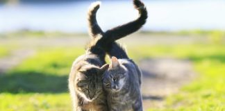 Щастя в дім: астролог назвав знаки Зодіаку, яким потрібно завести кота - today.ua