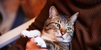 ТОП-5 найбільш відданих порід котів - today.ua