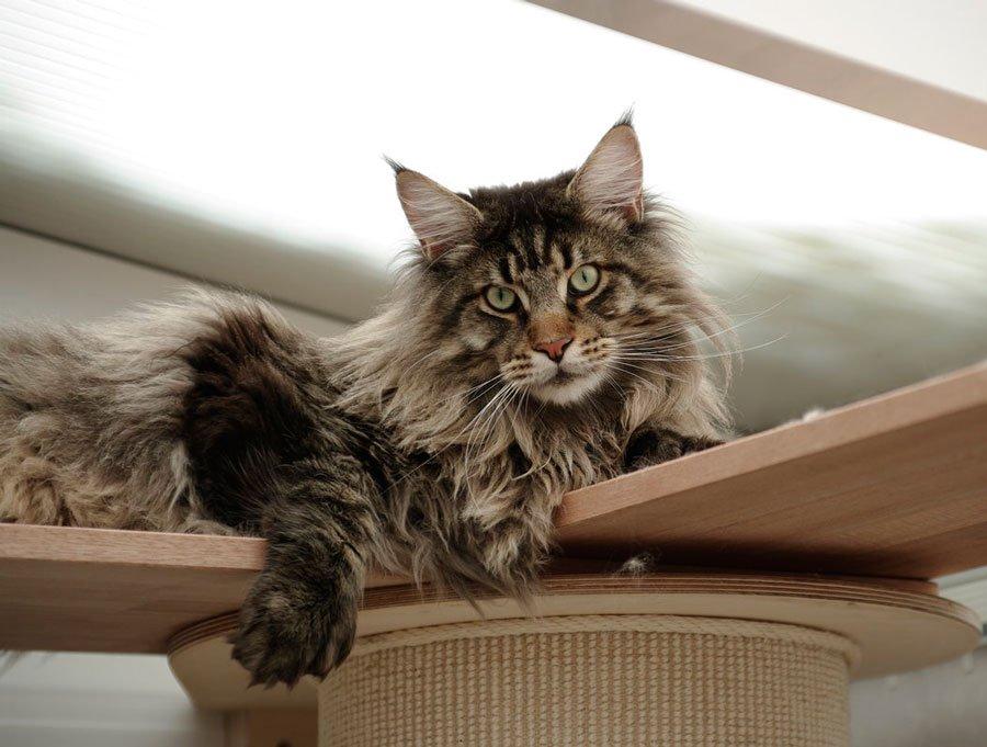 ТОП-5 самых преданных пород котов