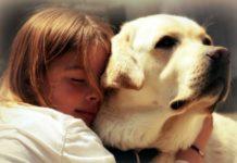 ТОП-3 породи собак, які врятують людину від депресії - today.ua