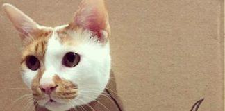 """Коти-дракони захоплюють Інтернет: оригінальна стрижка тварин лякає і одночасно смішить"""" - today.ua"""