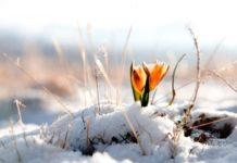 Синоптики розповіли про погоду на березень: докладний прогноз на найближчий місяць - today.ua