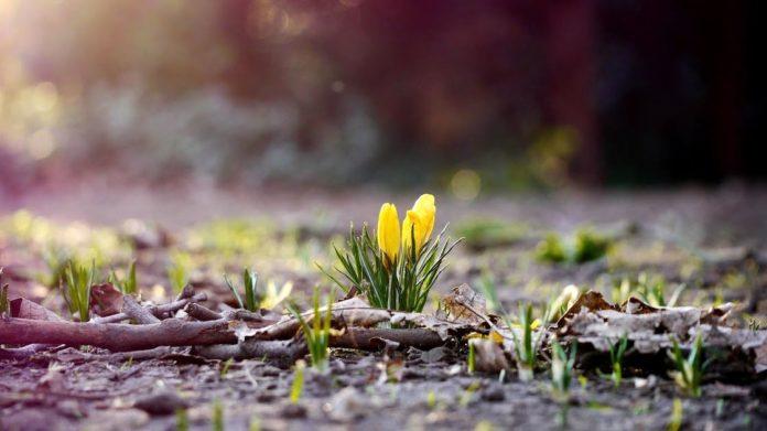 Проводжаємо зиму: синоптики обрадували прогнозом на перші вихідні березня - today.ua