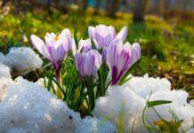 Весняне потепління: синоптики розповіли, коли закінчаться дощі і холоди - today.ua