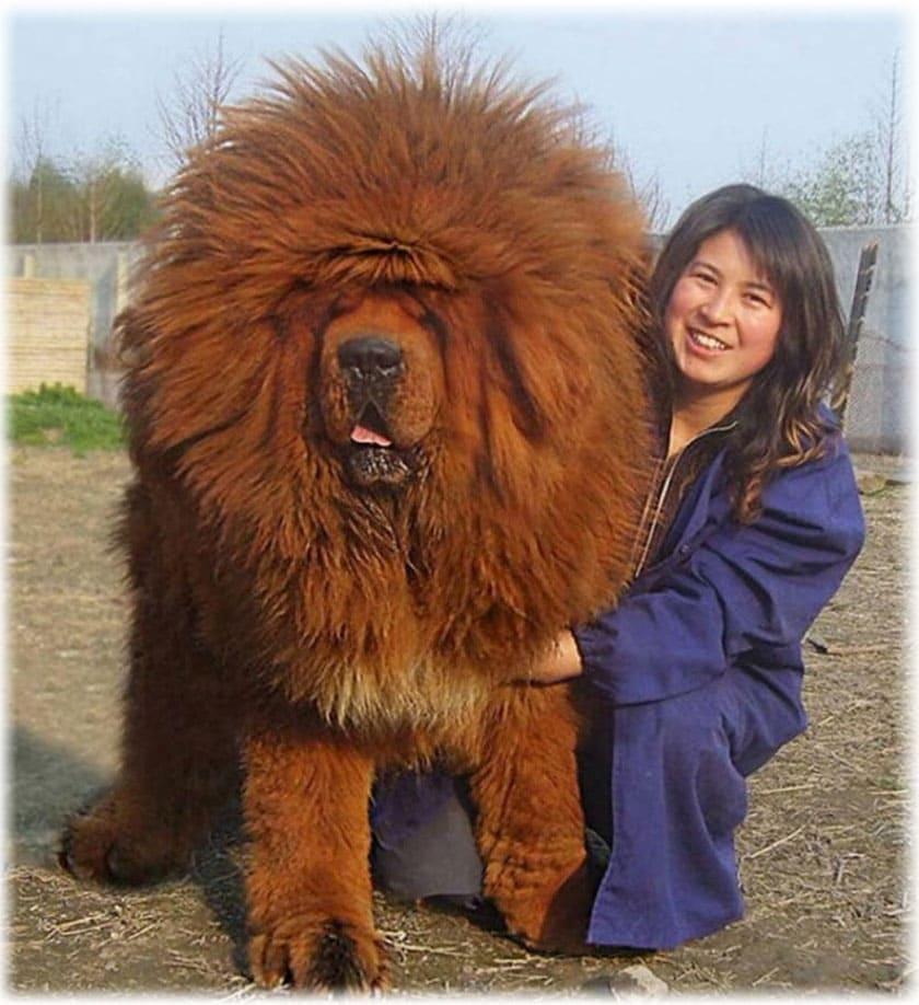 ТОП-3 порід собак, які стануть найкращими захисниками