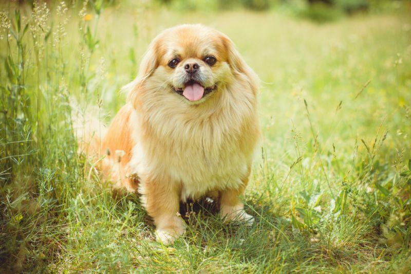 Топ-5 пород собак, которые за милой внешностью скрывают агрессию