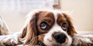 За ціною квартири: ТОП-5 найдорожчих порід собак - today.ua