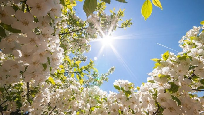 Україні загрожує посуха: синоптики озвучили прогноз погоди на весну - today.ua