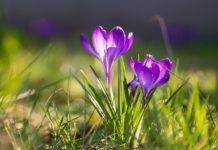 23 февраля – День Прохора Весновея: запреты для мужчин и народные приметы - today.ua