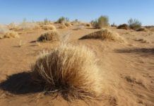 В Украину идет аномальное тепло и засуха: тревожный прогноз погоды на весну 2020 - today.ua