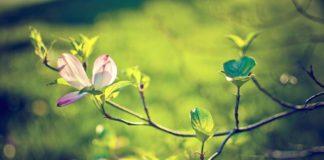 В Україні очікується найтепліший весняний день: повітря прогріється до +18 градусів - today.ua