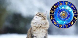Гороскоп: які тварини є спорідненими душами для знаків Зодіаку - today.ua