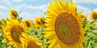 """Українців чекає """"задушливе"""" літо: прогноз погоди на теплий сезон - today.ua"""