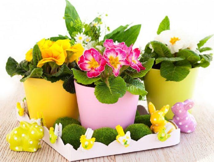 Молодик згубний для кімнатних квітів: як захистити рослини від Місяця - today.ua