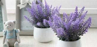 Які кімнатні квіти допоможуть швидко заснути: 4 рослини, незамінні для спальні - today.ua
