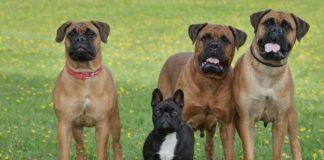 5 порід собак, яких не можна утримувати в міських квартирах - today.ua