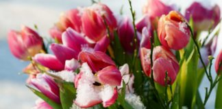 2 березня: яке свято, традиції, прикмети та день ангела - today.ua