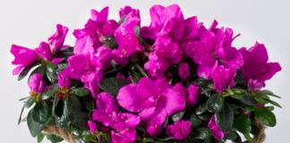 Вісники бідності: 3 кімнатні рослини, які притягують в будинок злидні - today.ua