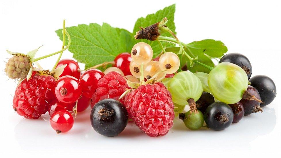 Крыжовник – польза и вред: почему к ягоде стоит относиться с осторожностью