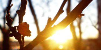 Синоптики розповіли, коли чекати аномального потепління: прогноз погоди на тиждень - today.ua