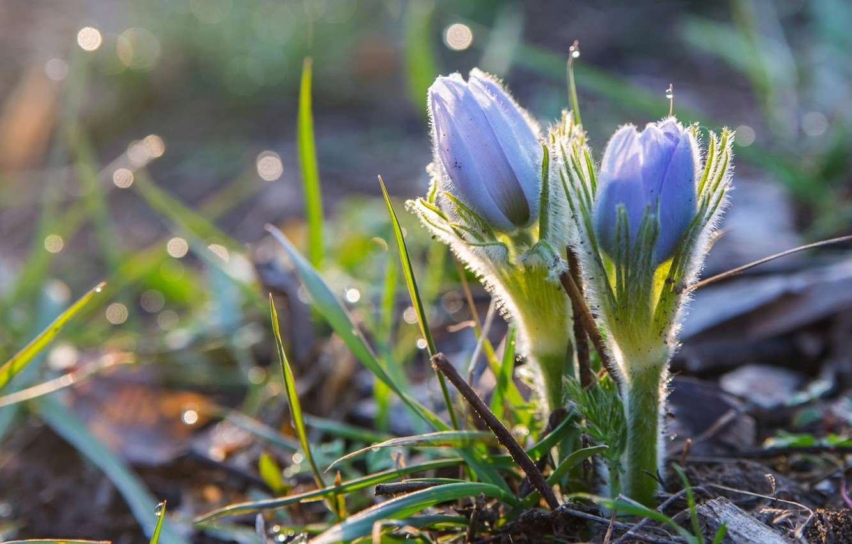 Свято 28 березня: в Олександрів день слід побоюватися пристріту і проклять