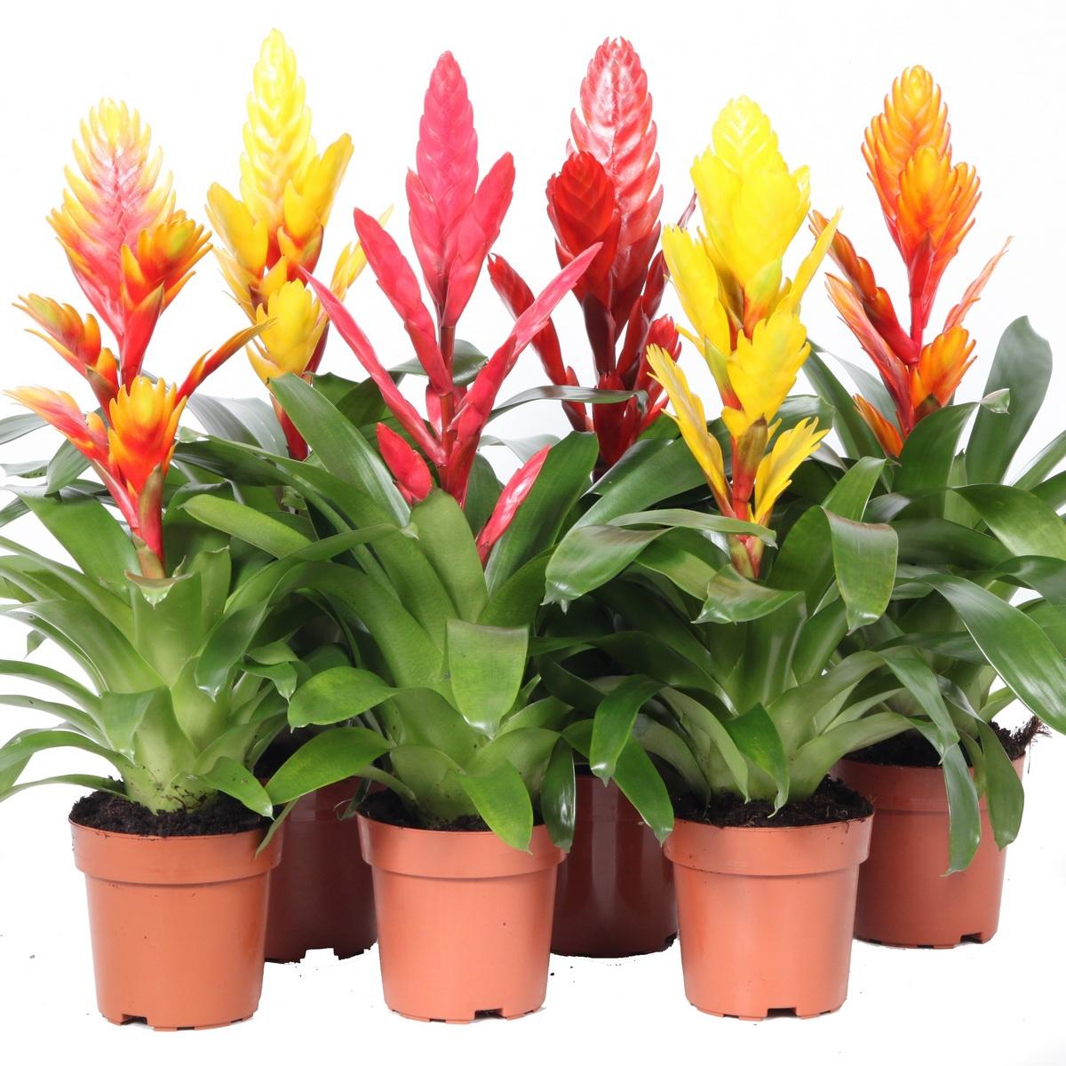 Генераторы позитива: 5 комнатных растений, поднимающих настроение