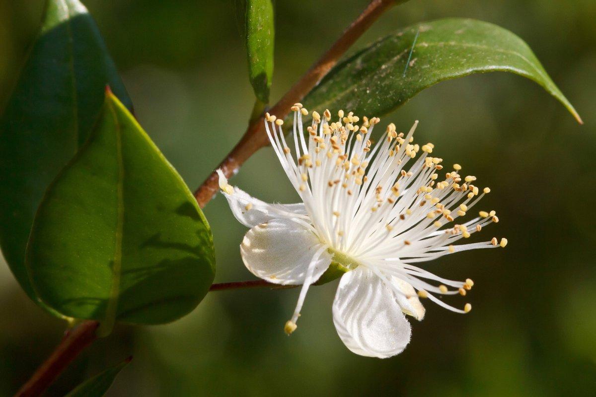 Які кімнатні рослини очищають повітря від вірусів та бактерій  - today.ua