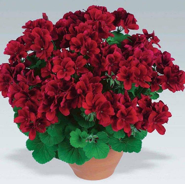 Комнатные цветы для настоящего счастья: Топ-3 самых лучших растения для дома