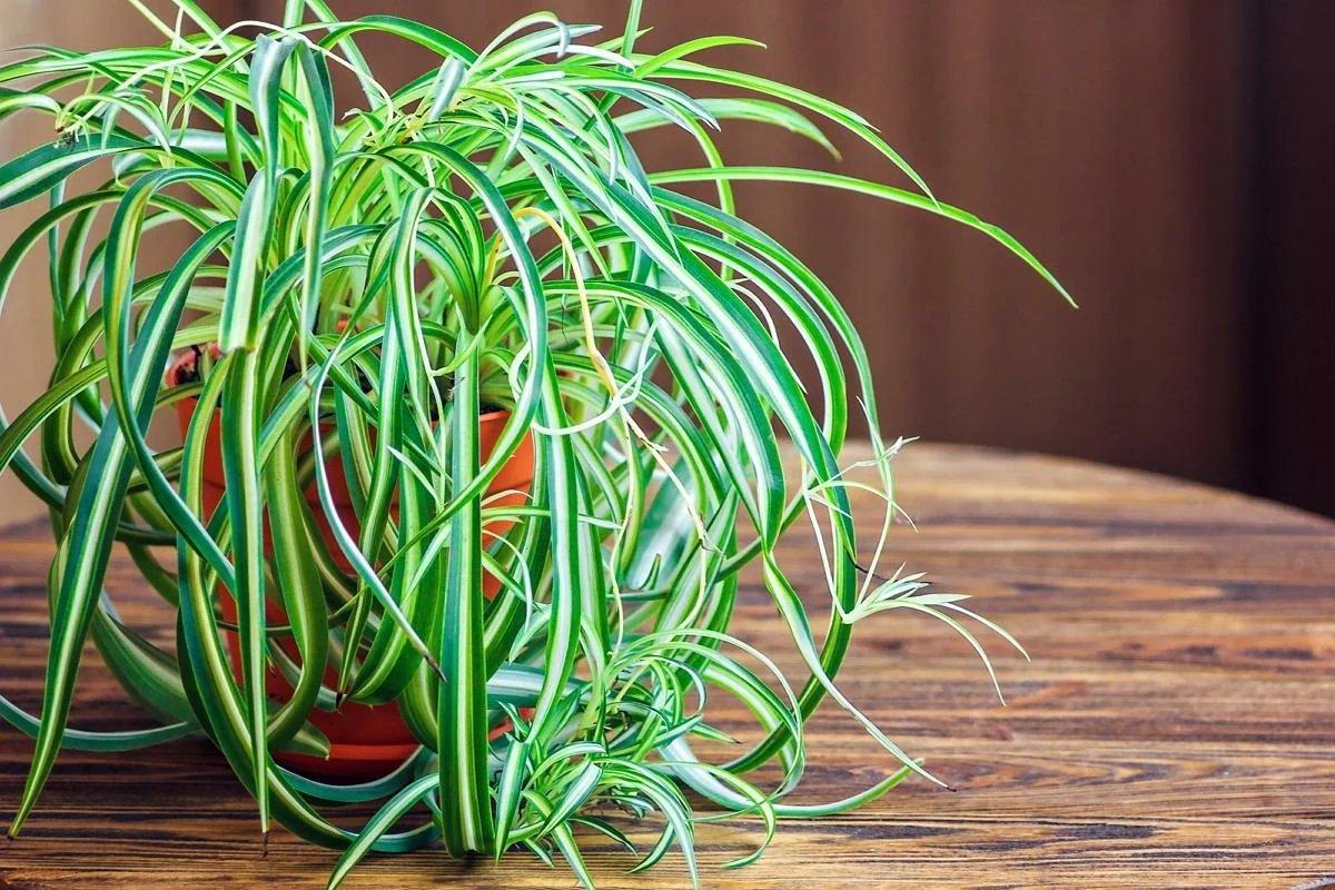 Комнатные растения, которые ускорят выздоровление при гриппе и ОРВИ
