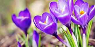 23 березня: яке сьогодні свято і що прийнято робити в День Василини - today.ua