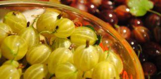 Аґрус – користь і шкода: чому до ягоди варто ставитися з обережністю - today.ua