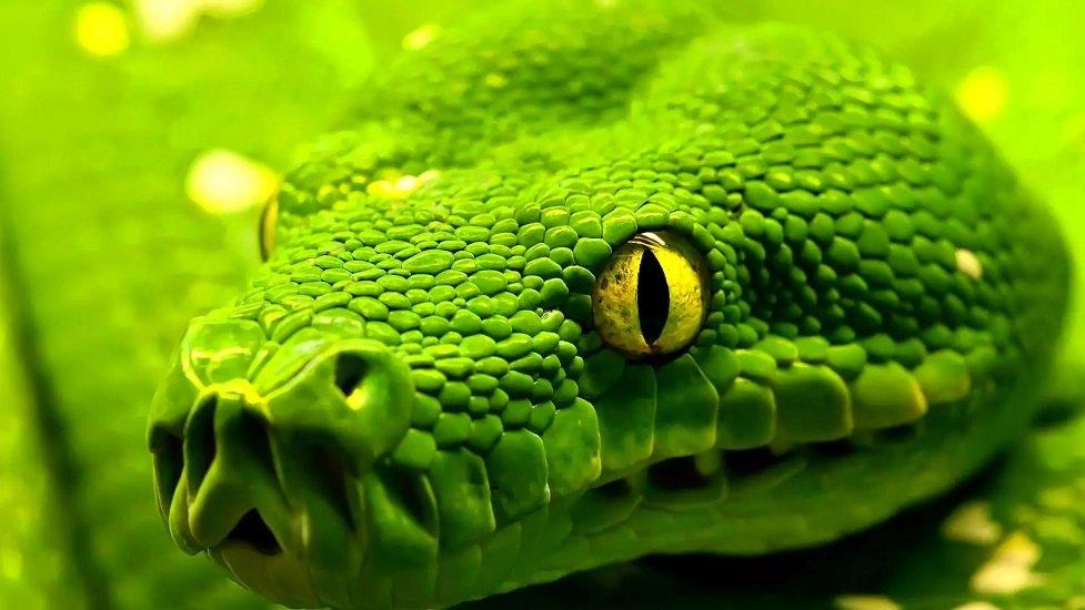 Гороскоп: які тварини є спорідненими душами для знаків Зодіаку