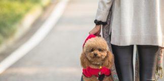 Всі нерви вимотають: ТОП-3 породи собак, які зовсім не слухаються господарів - today.ua