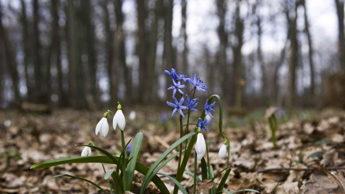 В Україні очікується найтепліший весняний день: повітря прогріється до +18 градусів