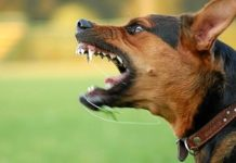 Заборонені в більшості країн: ТОП-5 найбільш небезпечних порід собак - today.ua