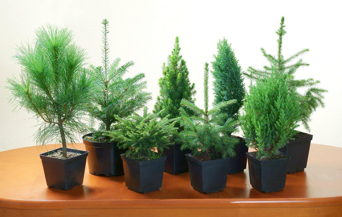 Які кімнатні рослини очищають повітря від вірусів та бактерій
