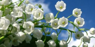 """6 березня: яке сьогодні свято і чому у цей день настає потепління"""" - today.ua"""