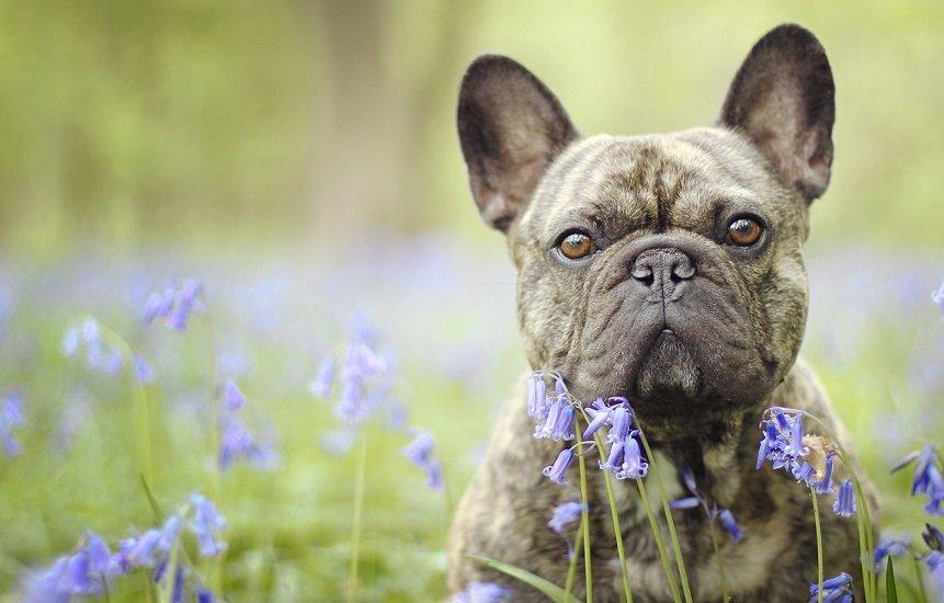 Не требуют много внимания: ТОП-5 пород собак для трудоголиков