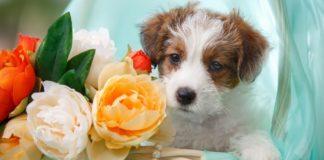 ТОП-3 породи собак, які можна подарувати коханій жінці на 8 березня - today.ua