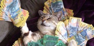 """ТОП-3 породи котів, які притягують в будинок гроші"""" - today.ua"""