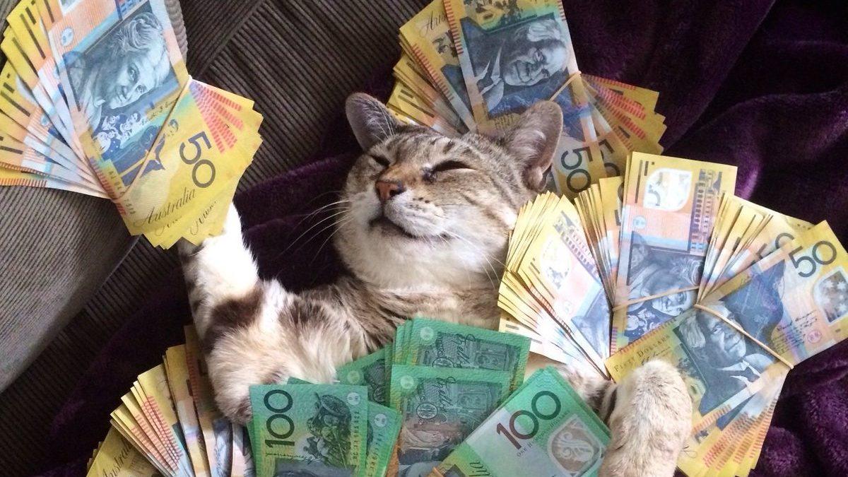 ТОП-3 породи котів, які притягують в будинок гроші - today.ua