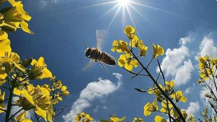 Теплий Олексій: як передбачити погоду на Великдень і що зробити для вдалого заміжжя - today.ua
