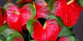 Генератори позитиву: 5 кімнатних рослин, що підіймають настрій - today.ua