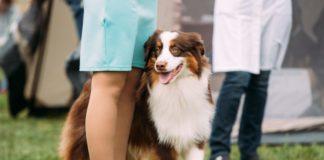 Завжди поруч: ТОП-3 породи собак, які не мають звички тікати від господарів - today.ua