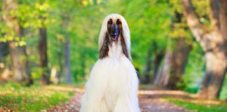Не вміють гавкати: ТОП-5 найтихіших порід собак - today.ua