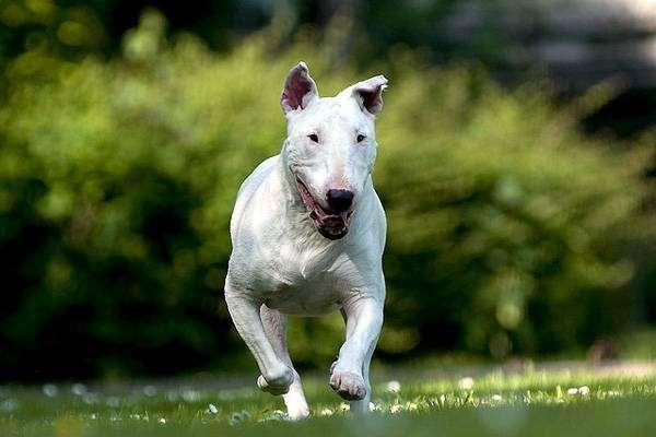 Найкращі захисники та охоронці: ТОП-5 найсильніших порід собак