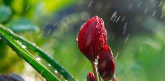 Україну накриють дощі і похолодання: синоптики розповіли про погоду на найближчі дні - today.ua