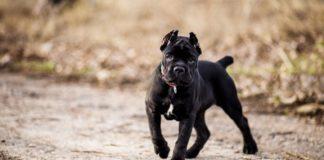 Жорстокі і некеровані: ТОП-5 найсильніших порід собак - today.ua