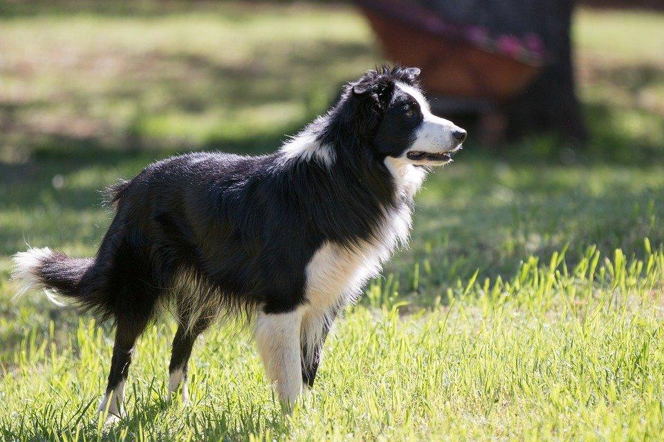 Кожному по кишені: ТОП-3 найбільш доступних порід собак